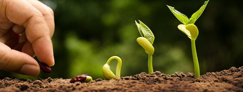 How to Grow in the things of God